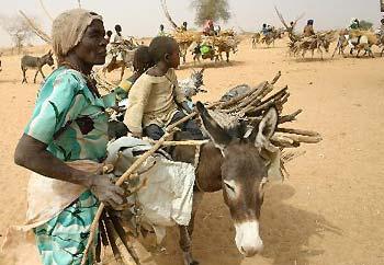 darfur sudan refugiados violencia burros