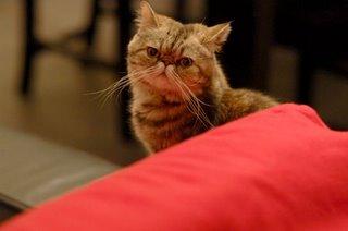 xu jinlei gato cat