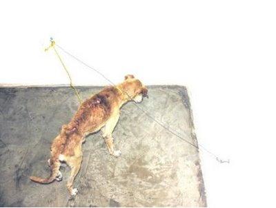 perro maltratado exposicion