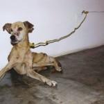 Las crónicas de Morbo: Un perro muere por inanición en una galería de arte