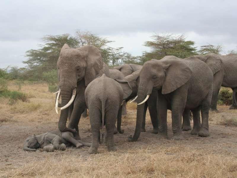 elefantes-durmiendo