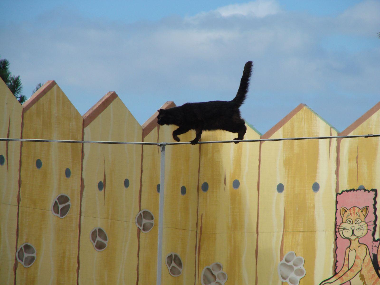 gato-equilibrio