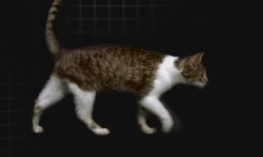 Anatomía del esqueleto de los gatos | Blogodisea