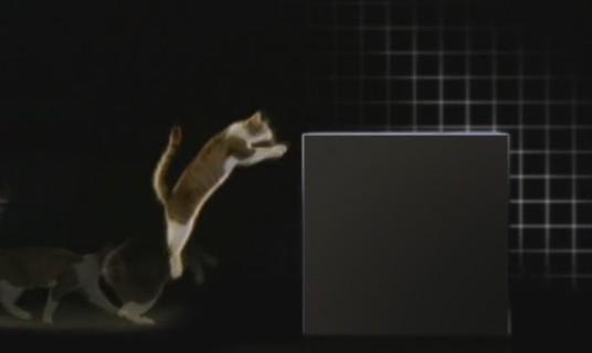 gatos-salto