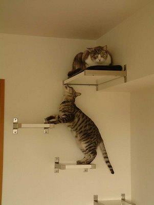 juego-gato-muebles