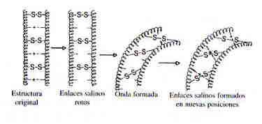 pelo-azufres-proteinas-liso-ondulado-ondulacion