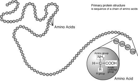 proteinas-cabello-pelo-estructura