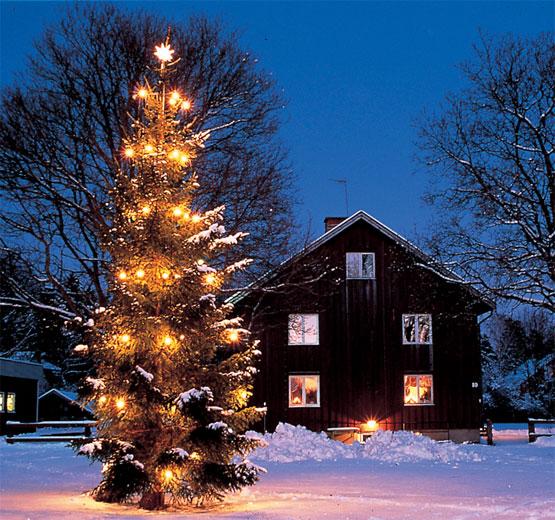 De d nde procede la costumbre del rbol de navidad - Arbol navidad nieve ...