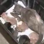 La gata que cuida ardillas