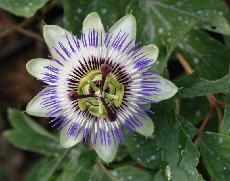 flor-desconocida