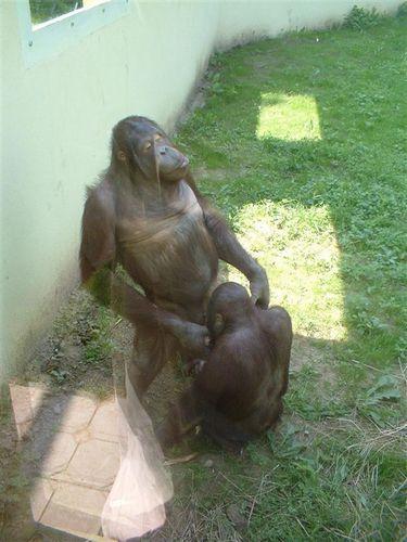 sexo-zoo-5