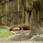 Desenfreno en el zoo