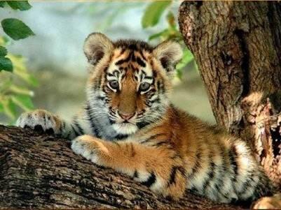 templo tigres