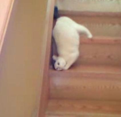 video gata bajando escaleras gato