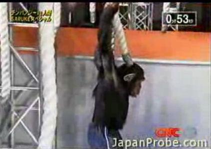chimpance-simio-versus-vs-hombre-pruebas-jpg