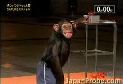 chimpance-simio-versus-vs-hombre
