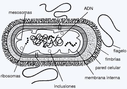 evolucion-materia-vida-7-celula-adn
