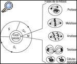 evolucion-materia-vida-9-cadenas-adn