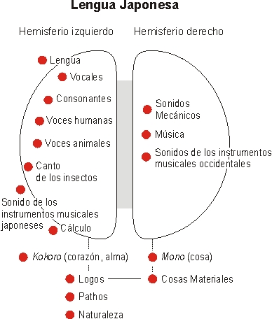 hemisferios-cerebrales-lengua-materna-11