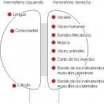 Lengua materna y hemisferios cerebrales