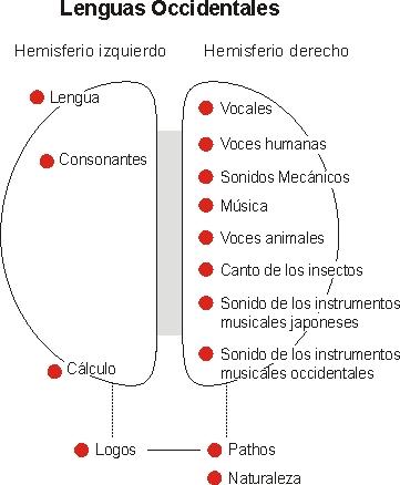hemisferios-cerebrales-lengua-materna-12