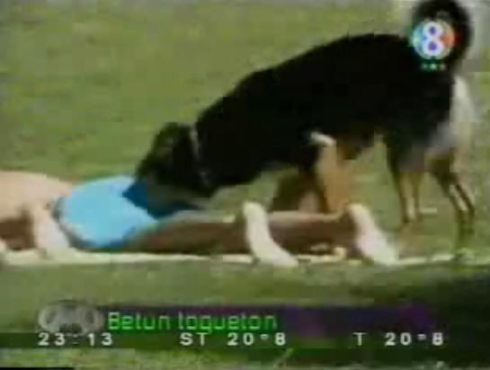 perro olisqueador