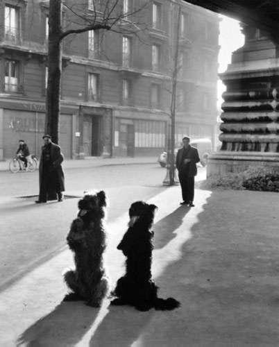 robert-doisneau-16-les-chiens-de-la-chapelle-1953