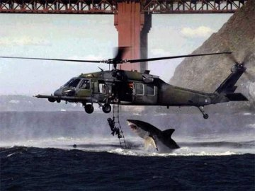 tiburon-helicoptero-shark-attack