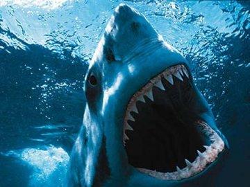 tiburon-jaws