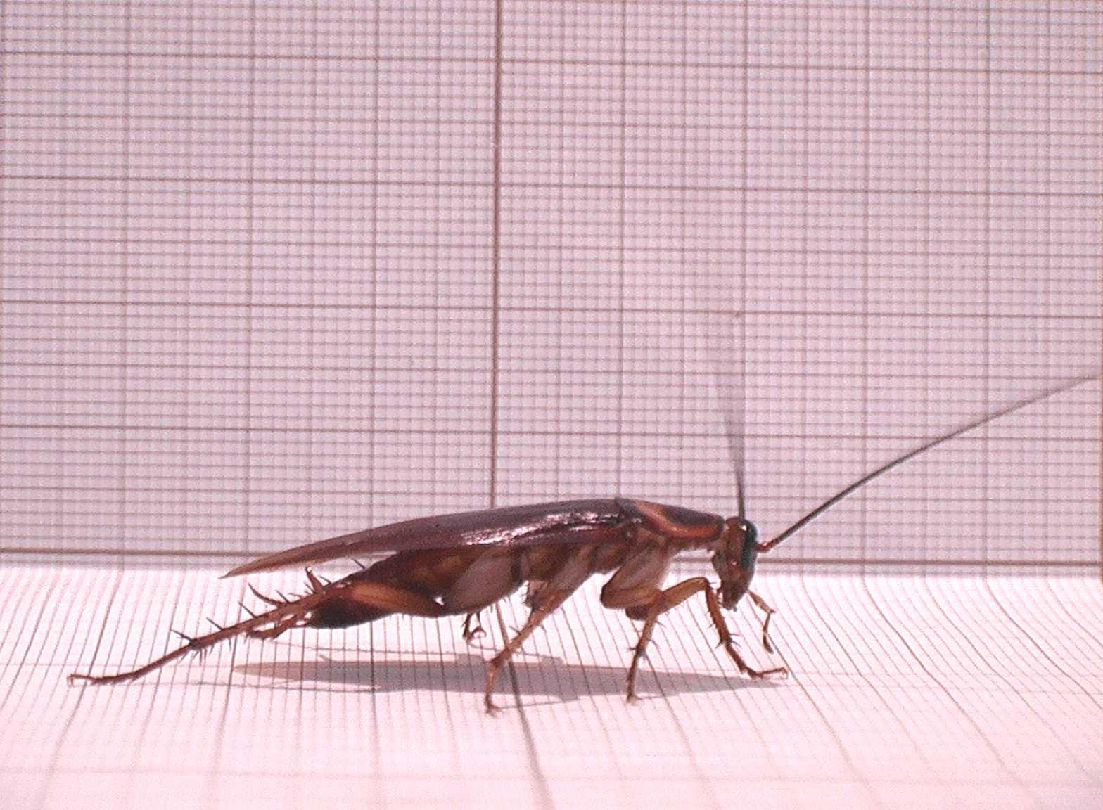 01-cockroach-cucaracha