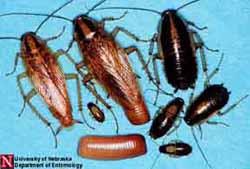 03-cucaracha-huevos