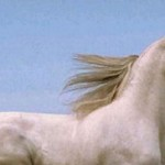 Adivina la pregunta 50: Lógica y matemáticas - Patas del caballo