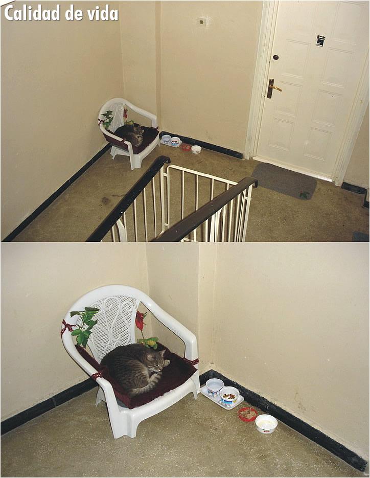 gato-silla-pasillo