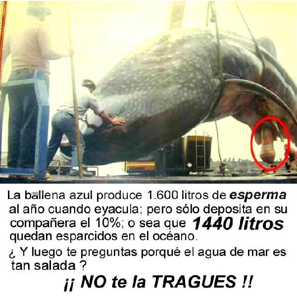 imagen-ballena