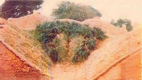 Vegetación