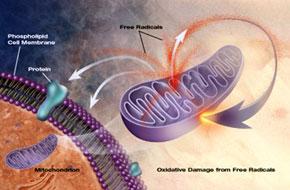 radicales-libres-celula