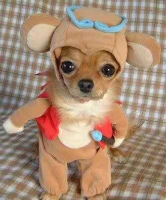 trajes-perros-osito