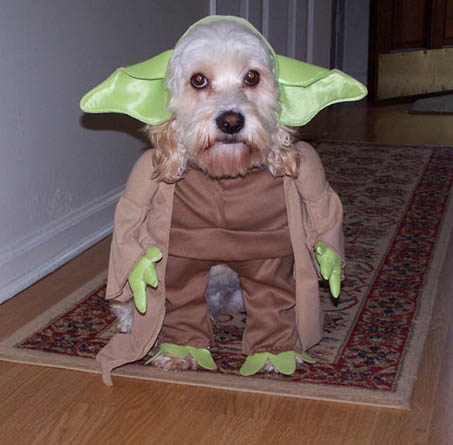 trajes-perros-star-wars