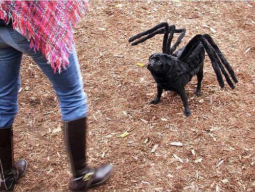 trajes-perros-tarantula