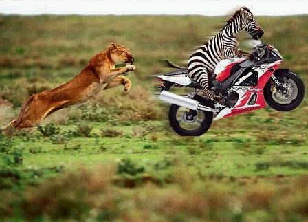 animales-graciosos-risa-cebra-leopardo