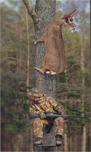 animales-graciosos-risa-ciervo