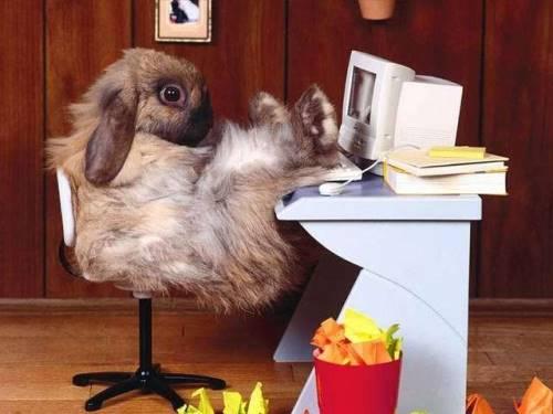 animales-graciosos-risa-conejo
