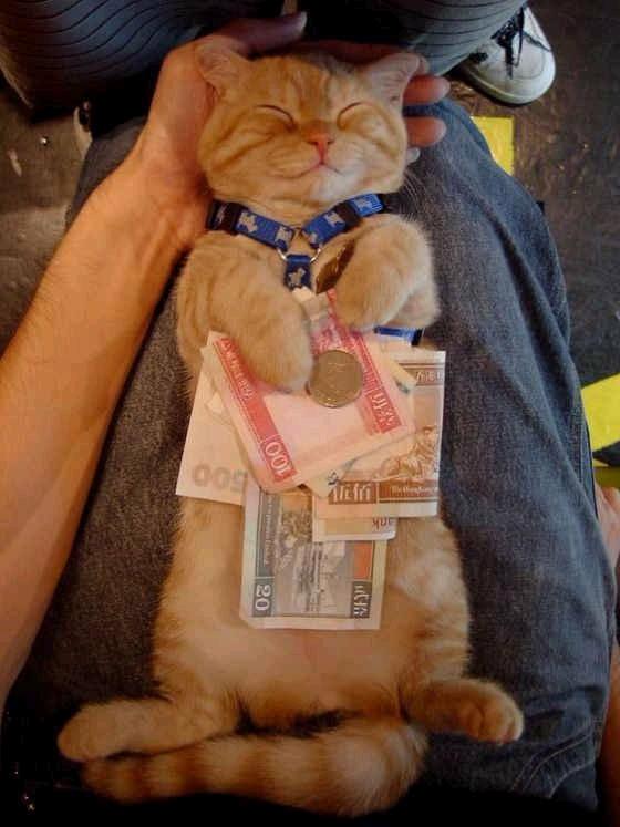 animales-graciosos-risa-gato-capitalista