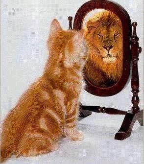 animales-graciosos-risa-gato-leon