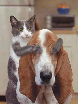 animales-graciosos-risa-gato-sorpresa-perro