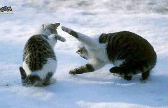 animales-graciosos-risa-gatos-nieve