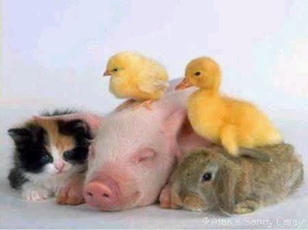 animales-graciosos-risa-granja