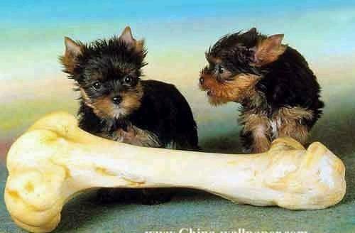 animales-graciosos-risa-perritos-hueso