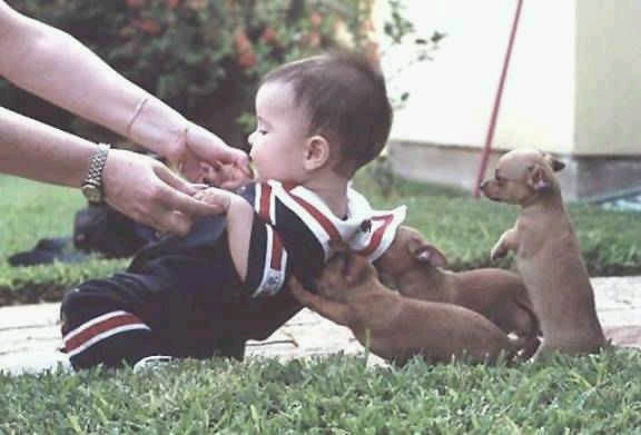animales-graciosos-risa-perritos-nino