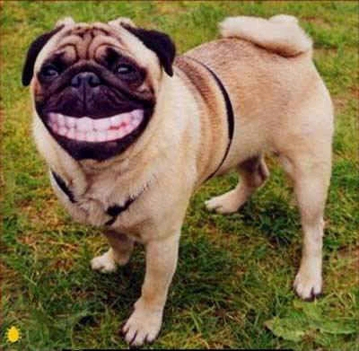 animales-graciosos-risa-perro